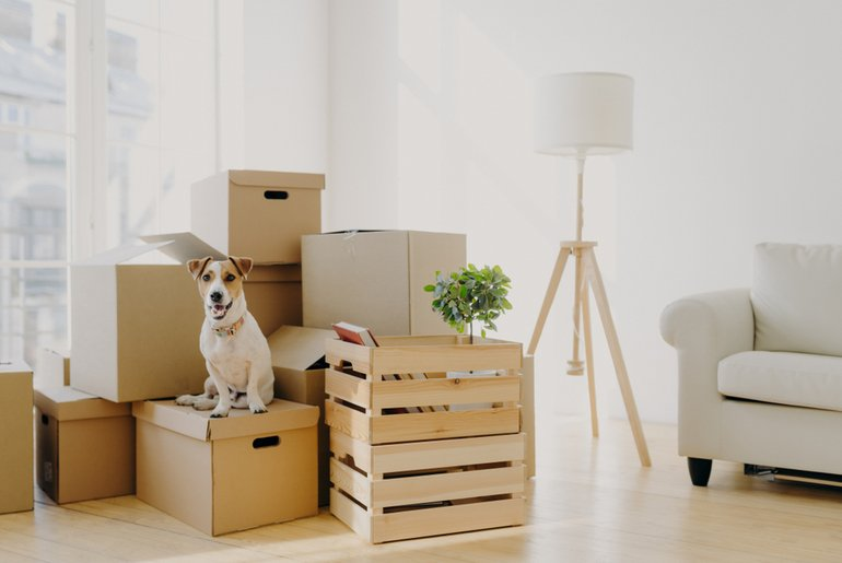 Moving Boxes and Dog
